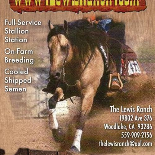 Buckskin Quarter Horse Stallion for Sale in California