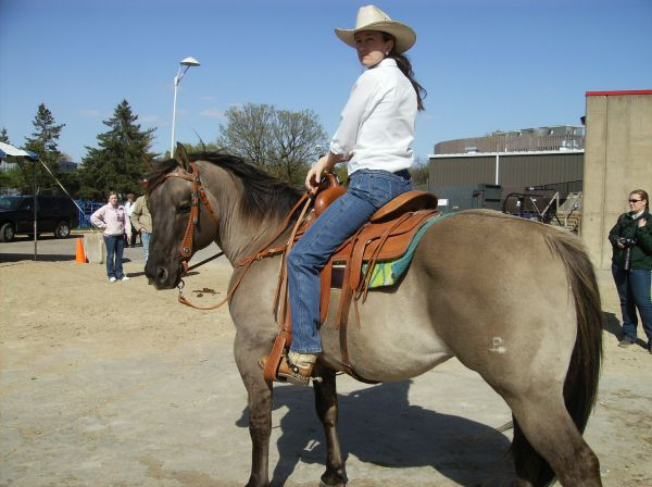 Grulla Quarter Horse Stallion for Sale in Wisconsin