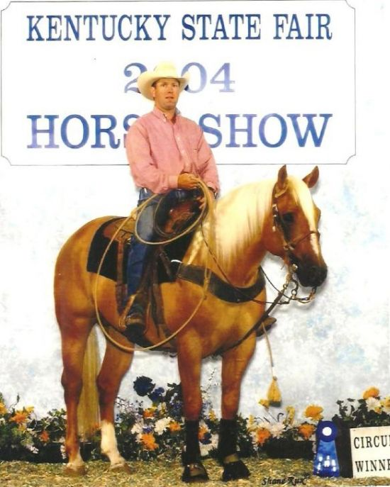 Palomino Quarter Horse Stallion for Sale in West Virginia