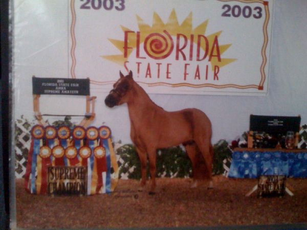 Sorrel Miniature Stallion for Sale in Tennessee