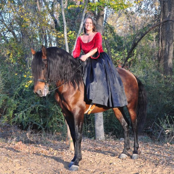 Bay Andalusian Stallion for Sale in Oklahoma