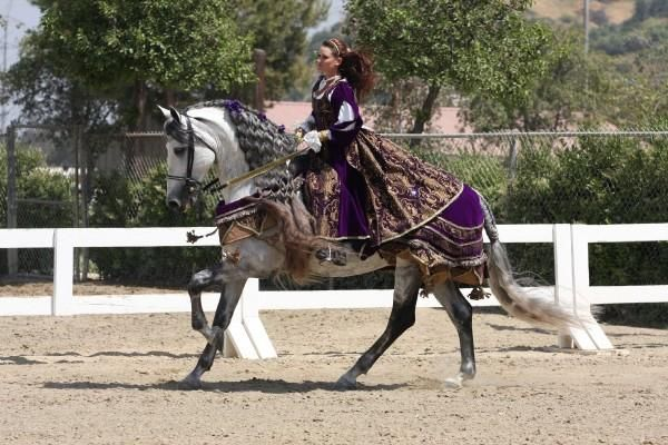 Grey Andalusian Stallion for Sale in California