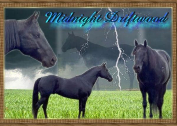 Black Quarter Horse Stallion for Sale in Oregon