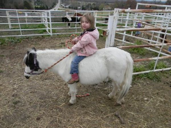 Overo Paint Pony Horse for Sale in Missouri