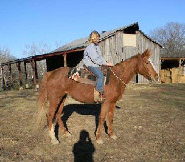 Red Roan Missouri Fox Trotter Horse for Sale in