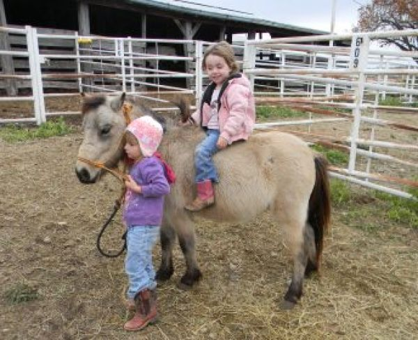 Buckskin Miniature Horse for Sale in Missouri