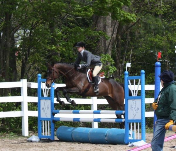 Bay Thoroughbred Stallion for Sale in Maine
