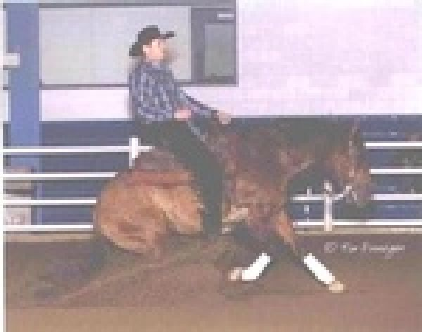 Dun Quarter Horse Stallion for Sale in Wisconsin