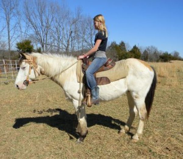 Pinto Horse for Sale in Missouri
