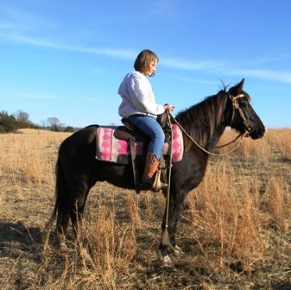 Brown Missouri Fox Trotter Horse for Sale in