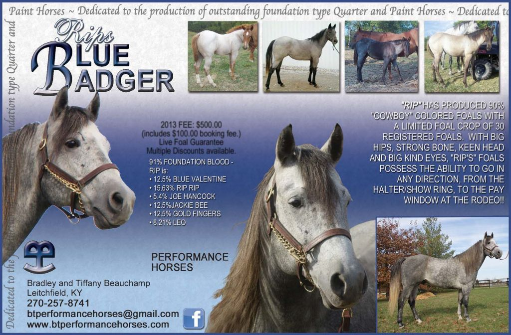 Blue Roan Quarter Horse Stallion