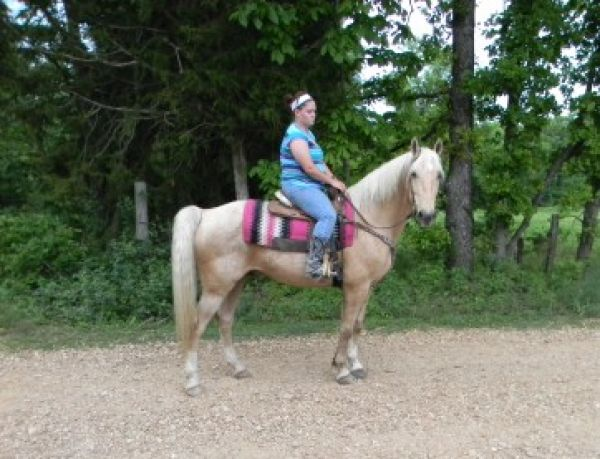 Palomino Missouri Fox Trotter Horse for Sale in