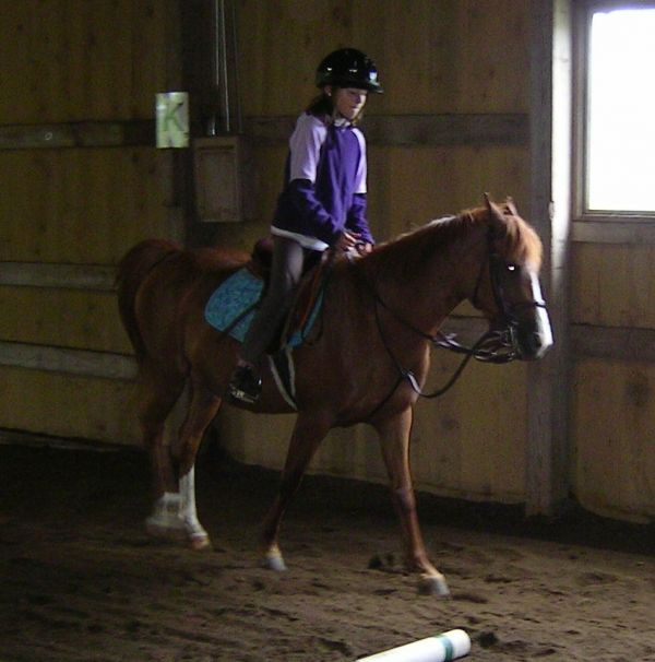 Chestnut Pony Mare