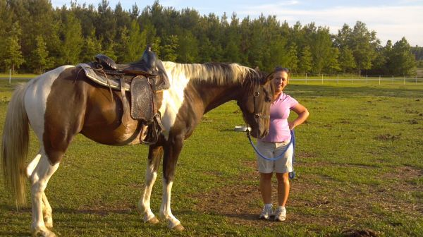 Brown Paint Stallion for Sale in North Carolina