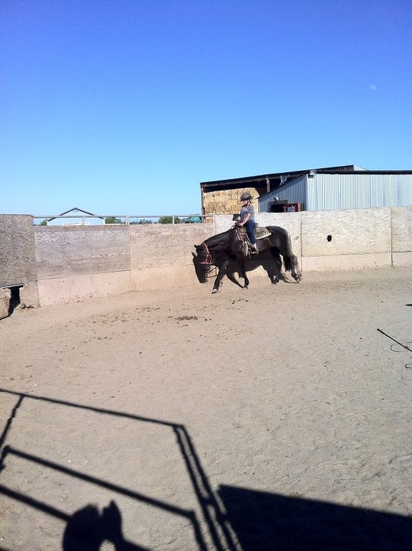 Black Quarter Horse for Sale in California