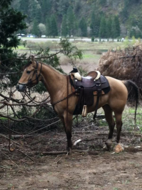 Dunskin Quarter Horse for Sale in Oregon