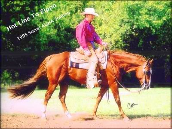 Sorrel Quarter Horse Stallion for Sale in Nebraska