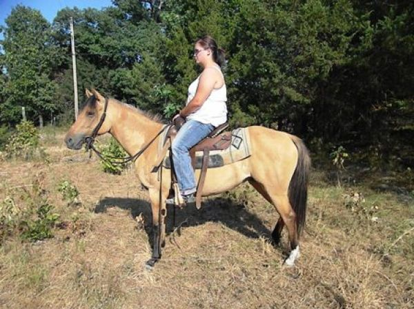Dun Pony Horse for Sale in Missouri