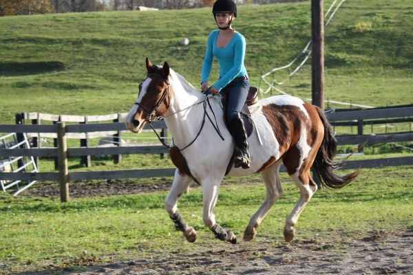 Tobiano Paint Mare