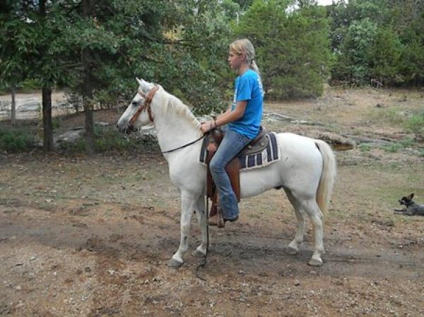 Grey Pony Horse for Sale in Missouri