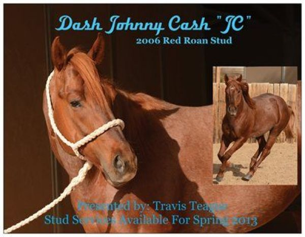 Red Roan Quarter Horse Stallion for Sale in Arizona
