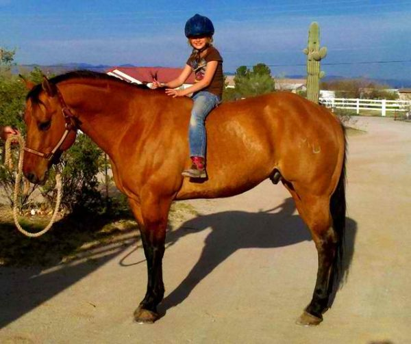 Dunskin Quarter Horse Stallion for Sale in Arizona