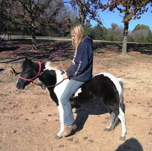 Tobiano Pony Horse for Sale in Missouri