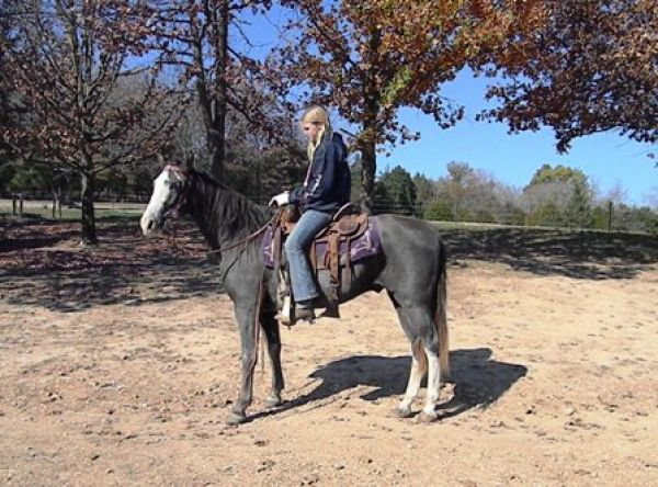 Blue Roan Tennessee Walking Horse for Sale in Missouri