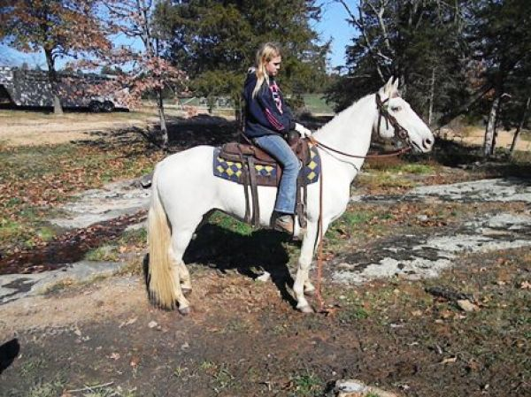 Champagne Tennessee Walking Horse for Sale in Missouri