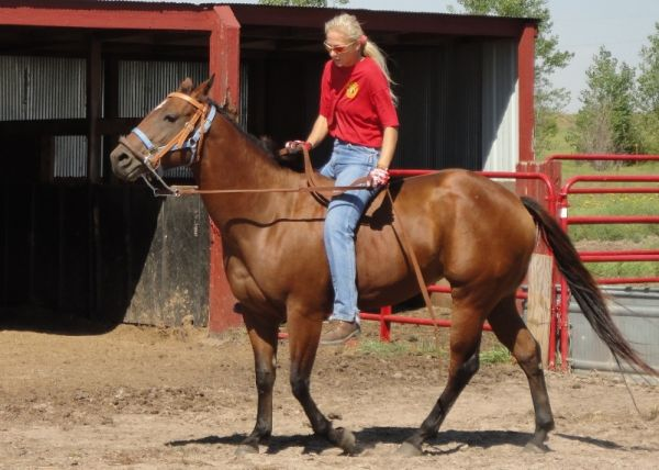 Bay Quarter Horse for Sale in Kansas