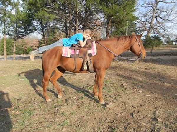 Sorrel Missouri Fox Trotter Horse for Sale in