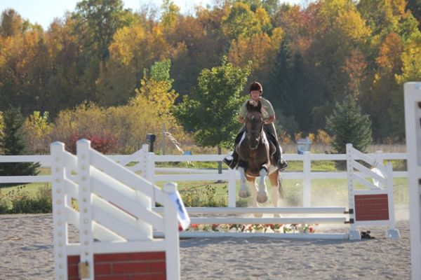 Buckskin Warmblood Stallion for Sale in Wisconsin