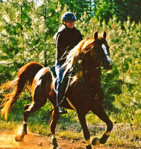 Chestnut Arabian Stallion for Sale in California