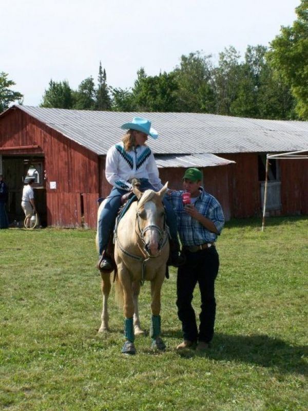 Palomino Quarter Horse Stallion for Sale in Quebec