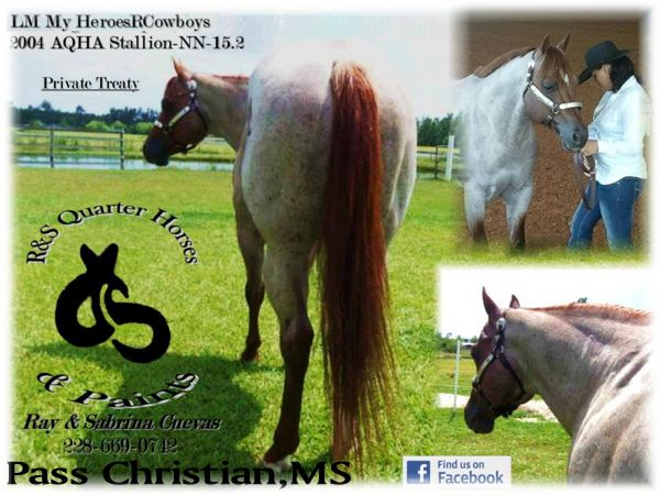 Red Roan Quarter Horse Stallion for Sale in Mississippi