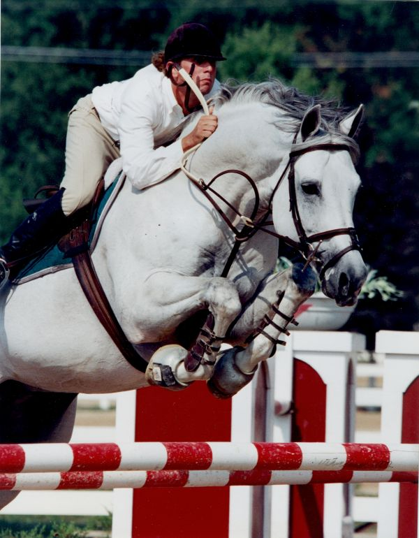 Grey Oldenburg Stallion for Sale in Wisconsin