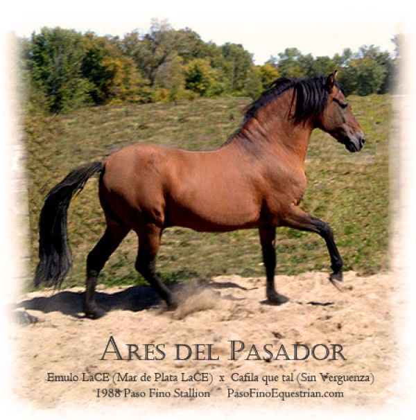 Dun Paso Fino Stallion for Sale in North Carolina
