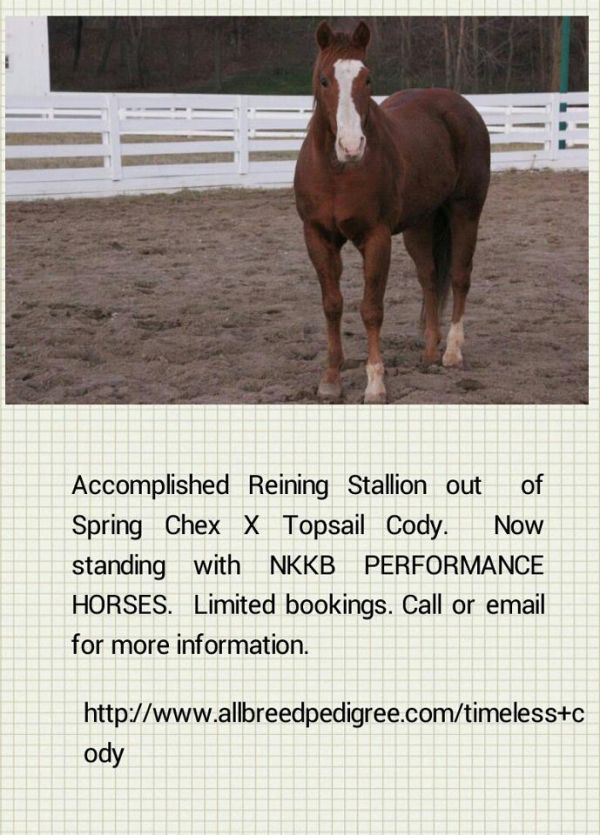 Sorrel Quarter Horse Stallion for Sale in Ohio