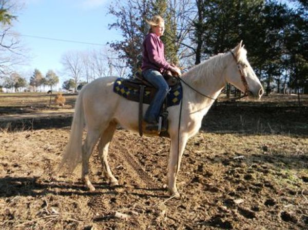Palomino Tennessee Walking Horse for Sale in Missouri