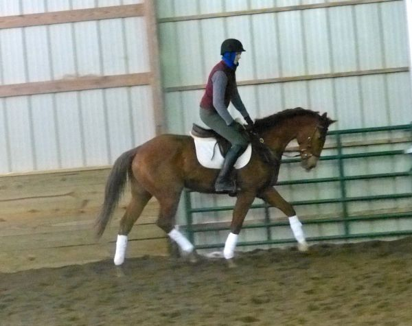 Chestnut Thoroughbred Horse for Sale in Ohio