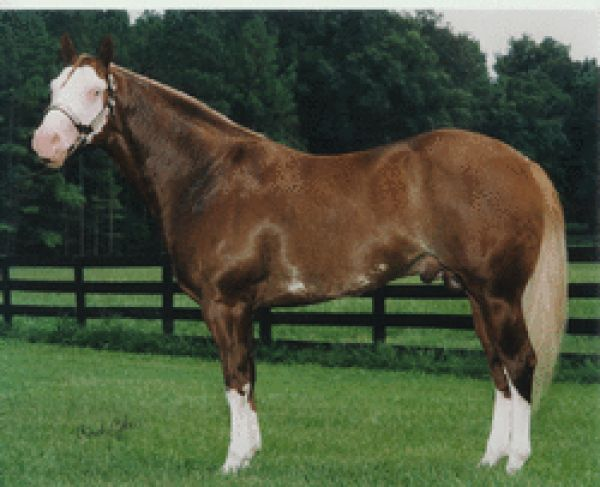 Sorrel Overo Paint Stallion