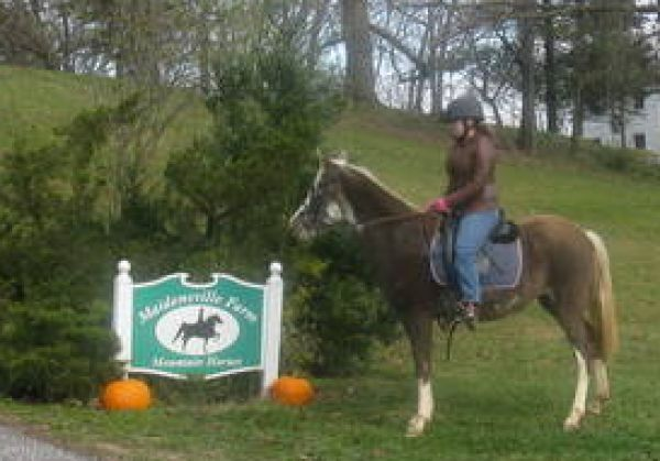 Chocolate Spotted Saddle Horse for Sale in Maryland