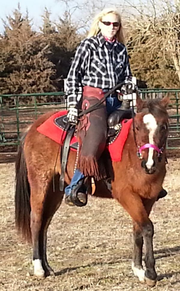 Bay Roan Quarab Horse for Sale in Kansas