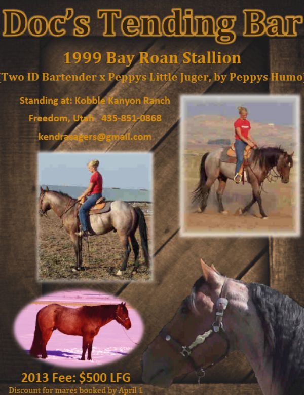 Bay Roan Quarter Horse Stallion