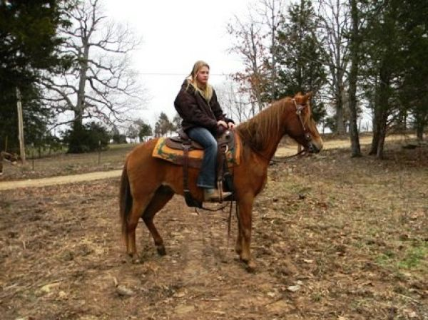 Sorrel Paso Fino Horse for Sale in Missouri