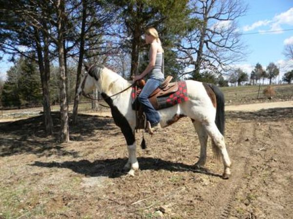 Overo Paint Horse for Sale in Missouri