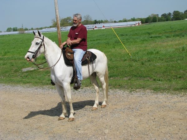 White Racking Horse for Sale in Alabama