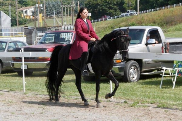 Black Tennessee Walking Stallion