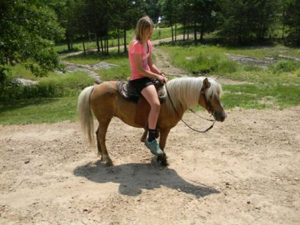 Palomino Pony Horse for Sale in Missouri