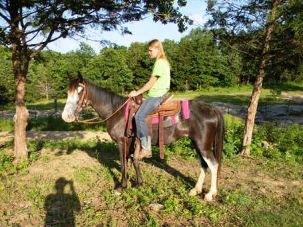 Blue Roan Missouri Fox Trotter Horse for Sale in